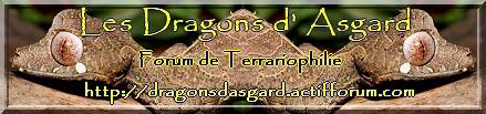 Les Dragons d'Asgard